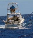 Port Douglas 34 foot dick ward fishing