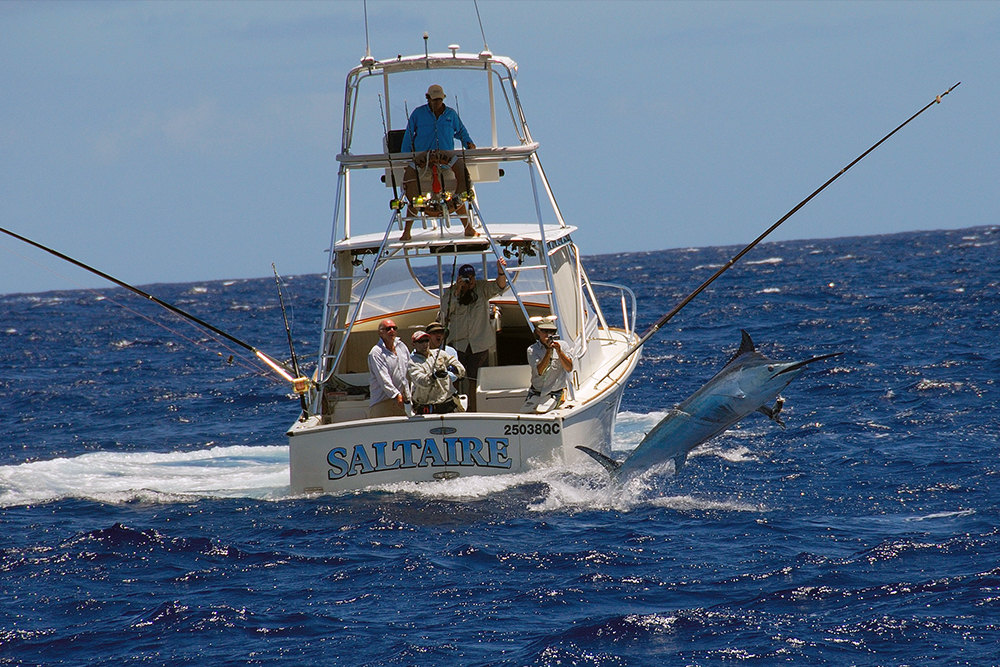 Budget sportfishing charter port douglas reef charters for Charter fishing trip