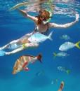 snorkeling in Port Douglas