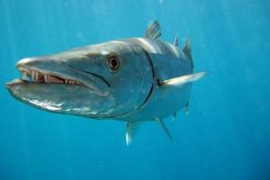 Port Douglas Fin Fish Closures