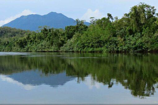 daintree rainforest river
