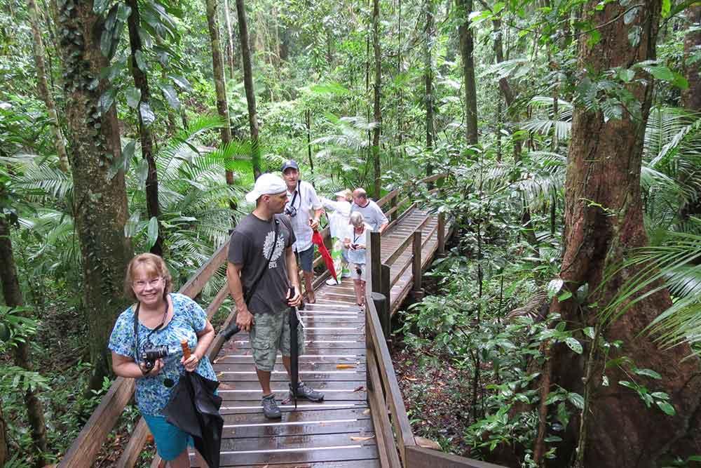 daintree rainforest walk