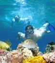 luxury barrier reef cruise snorkeler