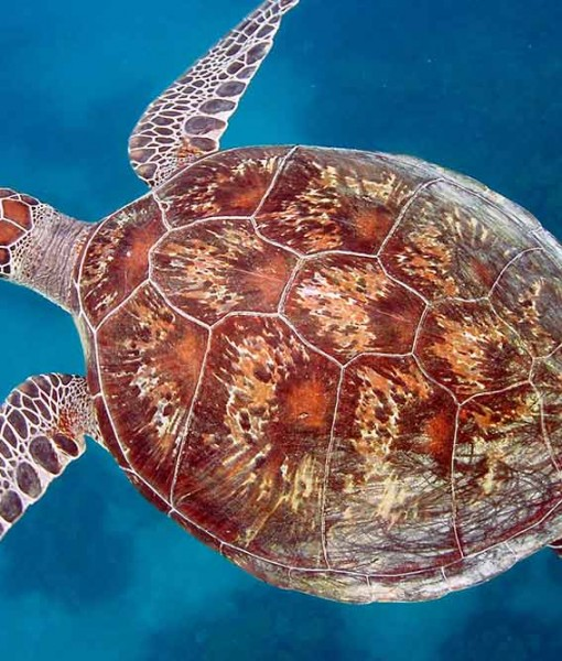 luxury island sailing turtle