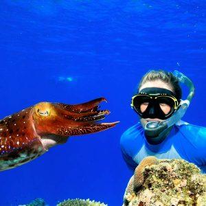 luxury reef tour snorkeler