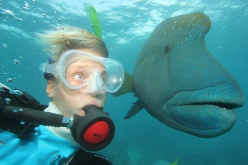 opal reef diving diver with wrasse