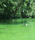 river drift snorkeling
