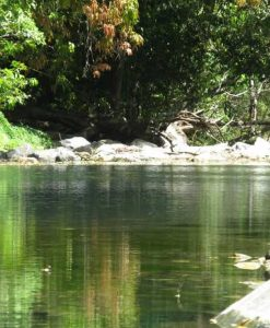 Spring creek, Mowbray & Port Douglas
