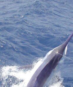 luxury fishing mothership marlin