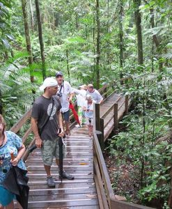 daintree rainforest walk