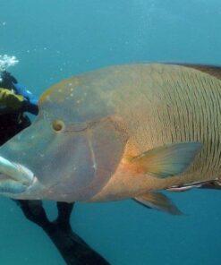 live aboard diving scuba diver